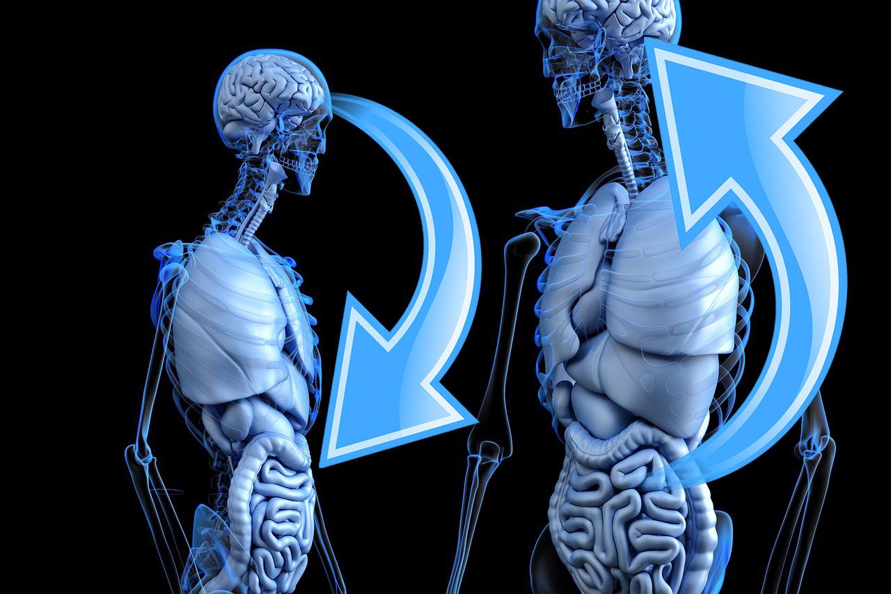 Stress e batteri intestinali